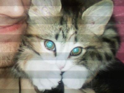 My Pussy is prettier than that one! Yes it has those crappy lines Ты get when Ты use a crappy phone to take a picture of a picture on the computer. lmao. I don't have the original anymore. :[