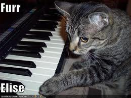 *sigh of relief* Well, my pussy can play the piano: