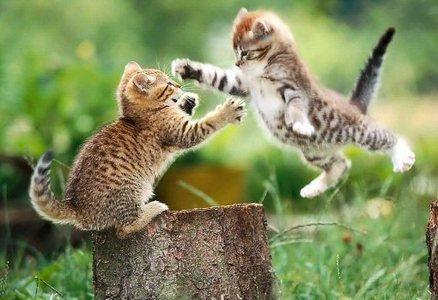 The epic battle of the ninja kittens!