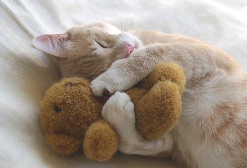 Well I really cinta kucing ^^...HoPe u like them too ^_* ~Dana~^^