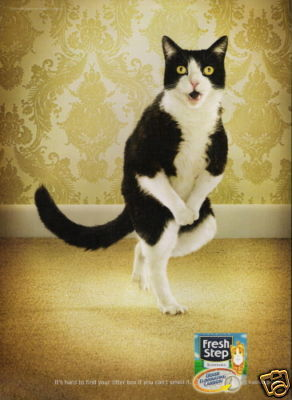 Post a Picture of The Funniest Cat You Can Find - Random ...  Post a Picture ...