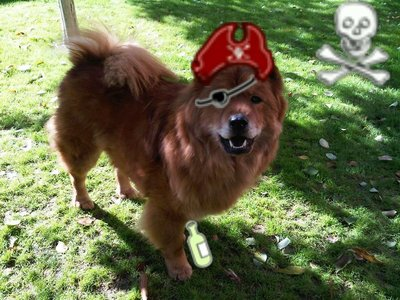 My friend's dog, Grizzie, dressed as a pirate. I know she's not a puppy, but it's still cute.