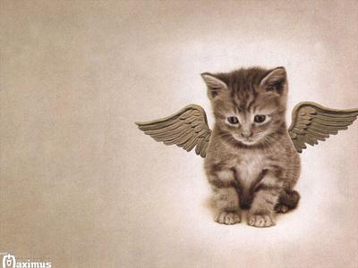 i 愛 ネコ