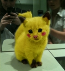 A Kittychu. Yes they exist :o