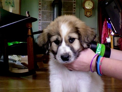 awwwwwwww what do anda think of my new puppy? we adopt him to.