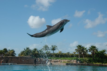 yupp...i smooched a dolphin...thats it...this is my fave pic of the trip.....my awesome background