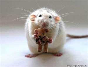 Rat!Go Yuki!