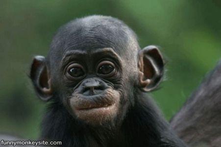 1992 Monkey