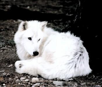Dog ^.^