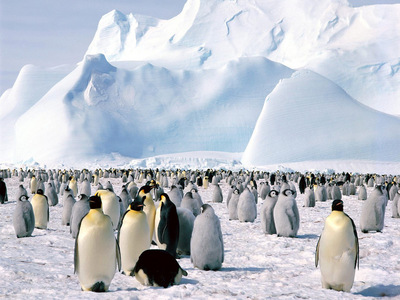 Antarctica. So anda can play with the penguins, don't worry they're friendly :P