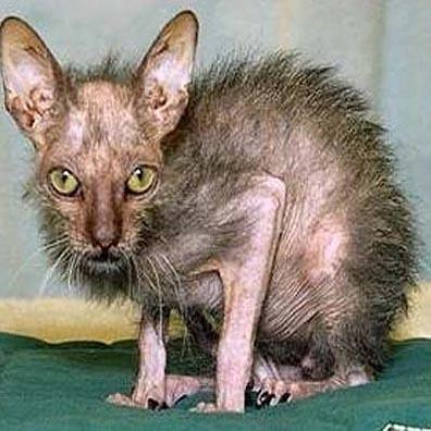 ummm when i was adopted i geuss یا when i got my cat 83Isn't he beutiful?