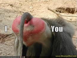 baboons butts r red i guess cheers no offense anyone ;p