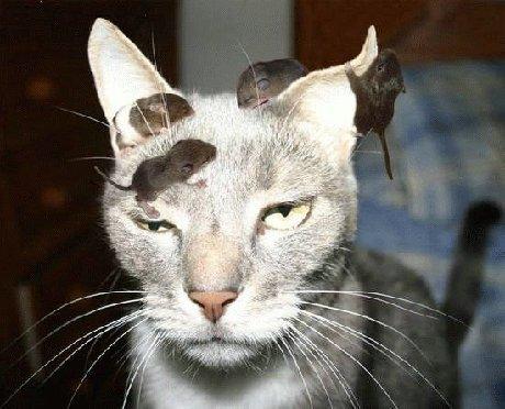 A cat! ♥