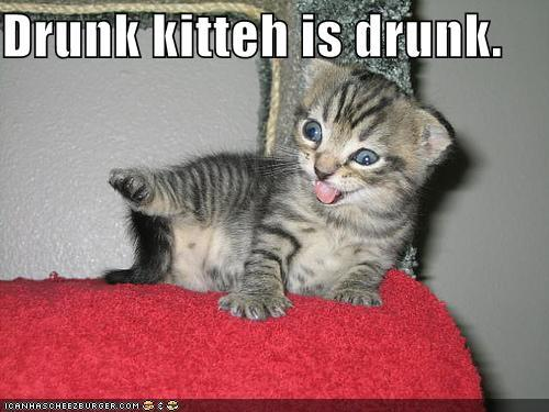 people say i remind them of a drunk kitten, so um i guess my flavor is...drunk kitten?