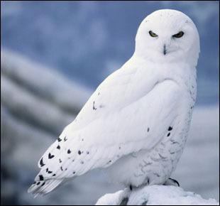 A owl.