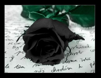 Black roses.