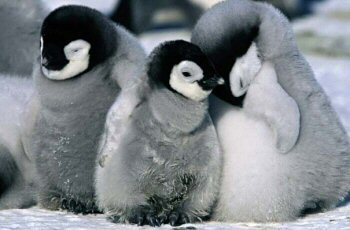 Penguins will always be cute.