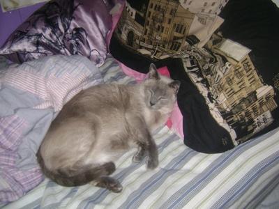Mushu, my fat lazy cat.