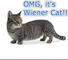 Wiener Cat!!!!
