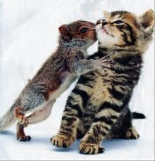I wanna be a cat!!! :D Everyone loves মার্জার ^^