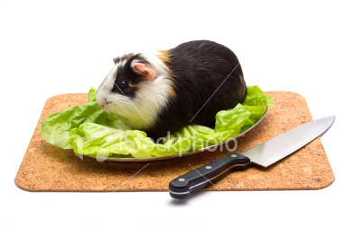 my guinea pigs name is oreo... i have no intension of eating her... though she does look tasty... no don't think don't think it's cruel to eat animals even though they do somwhere in africa.