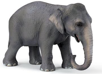 elephants are my favortie animal because of their size, apperance, and they way they can learn.