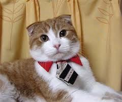 Cats! :D <3