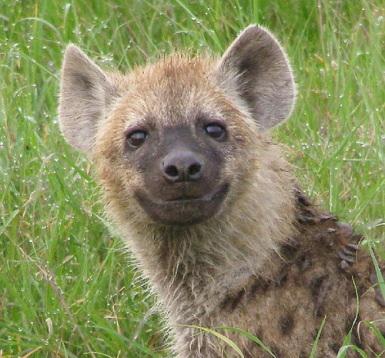 Hyena. :D