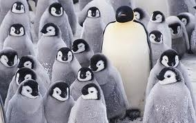 I know right! Penguins are awesome and they are the meaning of life. Well, for me anyway.