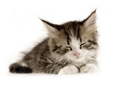 Kittens!!! *squeak*