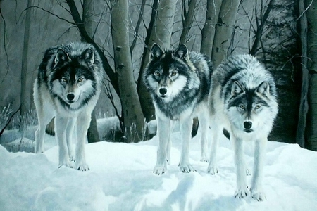 ...Those Волки are beautiful to me: