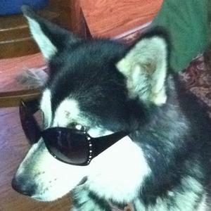 CIA Dog is suspicious....