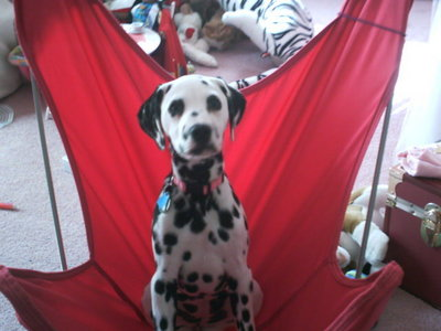 I have a girl dog named Dolly. She's a dalmatian, she's scared of everything, and she doesn't run- she hops.