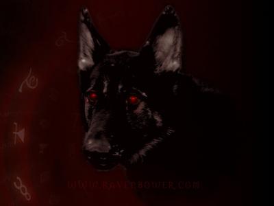 I have a pet Hellhound! :D