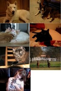 4 イヌ (didn't have pics of 2), 5 cats, 10 llamas (didn't have pics for 8), 6 魚 (didn't have pics of any of them)