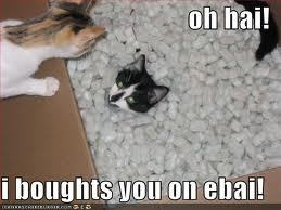 Post your Fave Funny Cat(s) Picture! Winner gets 5 Props!