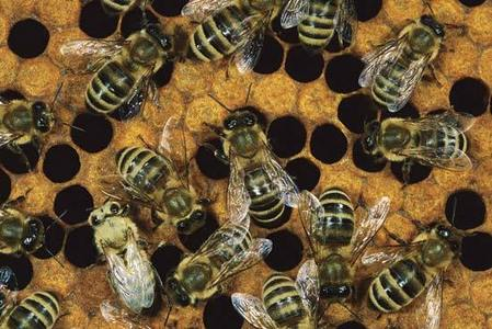 Bees *shudders*