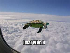 Your airplane Lost my turtle, do te know where it is?