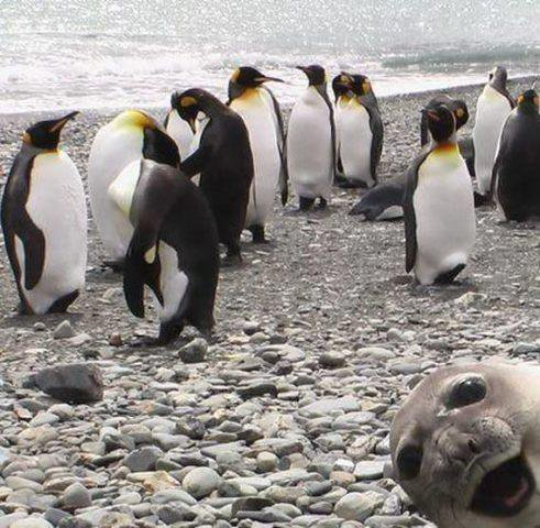 Gotta Liebe Mr.Seal's epic face (;