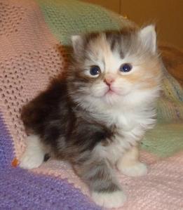 Look at my kitten