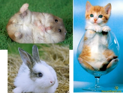 As a pet , Hamsters, rabbits and Cat's или Котята :D as an animal!! , panda :D _______________________ LOL mixed up some фото :P