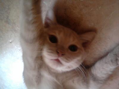 yes my cat Персик (Peach)