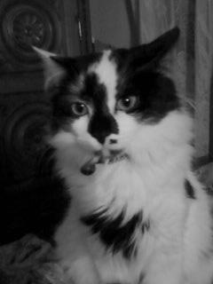 A kittie,called Tikussa! :D
