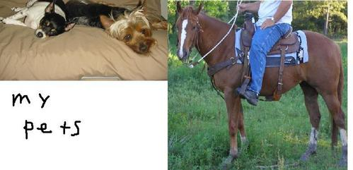 """Yes: 3 I have two Hunde and a horse. The names of the Hunde are """"Tooty"""" and """"Kobe"""". Tooty is a ratte terrier and Kobe is an Austrilan Silky. My horse, Rocky is just a typical horse- I don't know what breed he is."""
