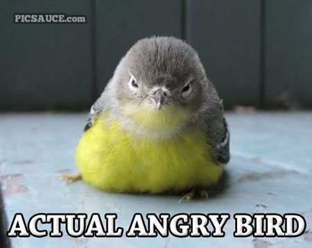 Yes, I am a person. And this is an Angry Bird.