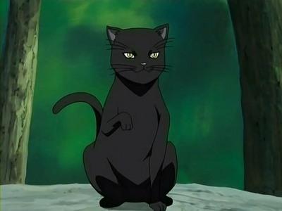 ANIME CAT - Anime Answers - Fanpop | 400 x 300 jpeg 20kB