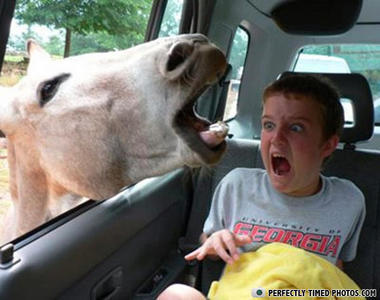 The perfect piture of pure terror... I shouldn't laugh as hard as I do but still! RAWR FEAR THE HORSE!