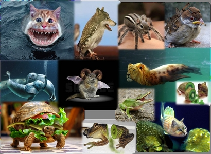 which of these animales do tu like?