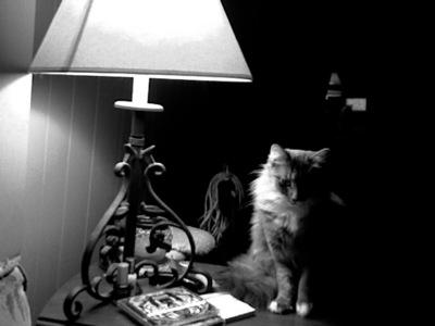 The one of my cat Ika. It's funny cuz I didn't even know I was taking it lol.