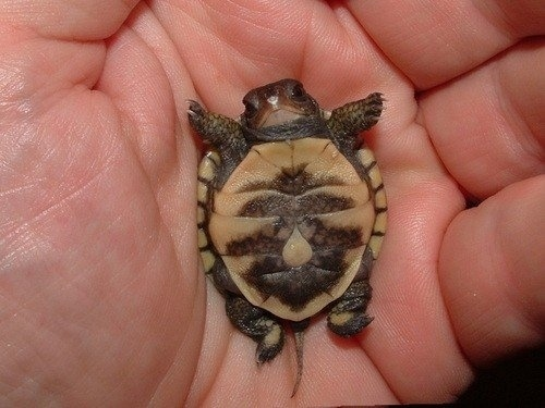 No person could ever keep hating turtles after seeing this picture.